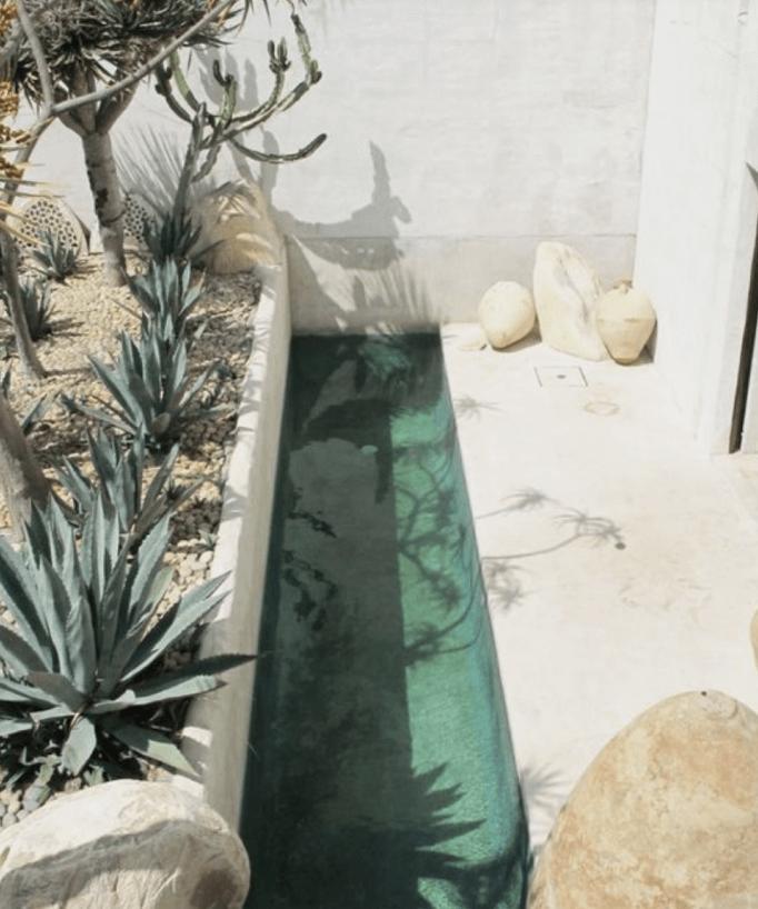 aloe plants with wading pool