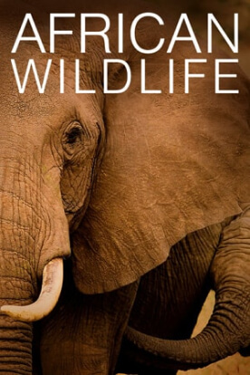 African Wildlife live cam
