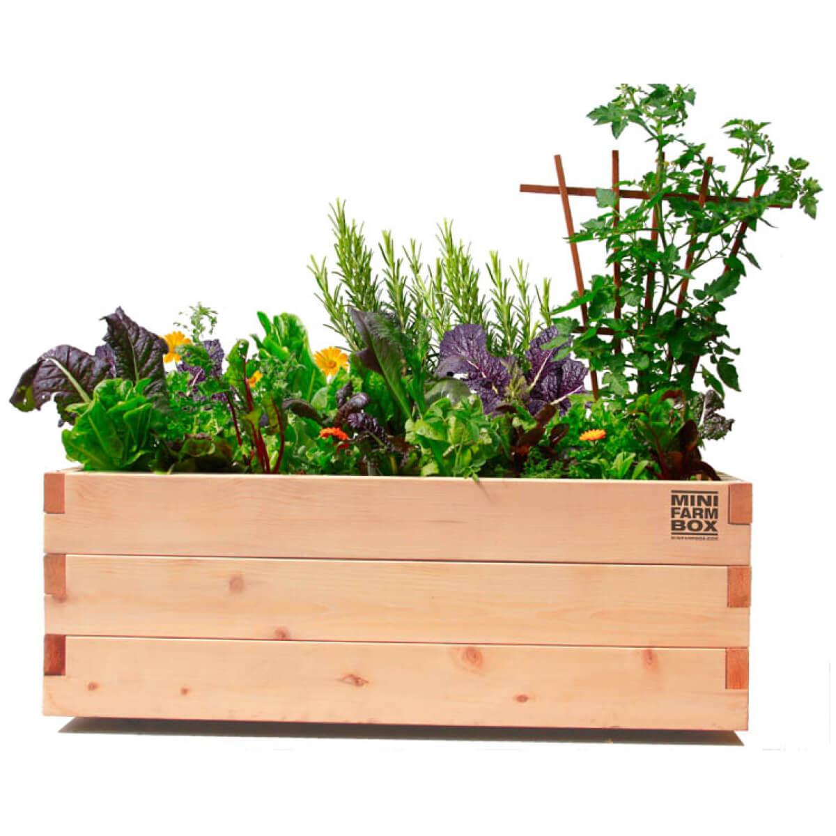 Mini Farm Patio Box