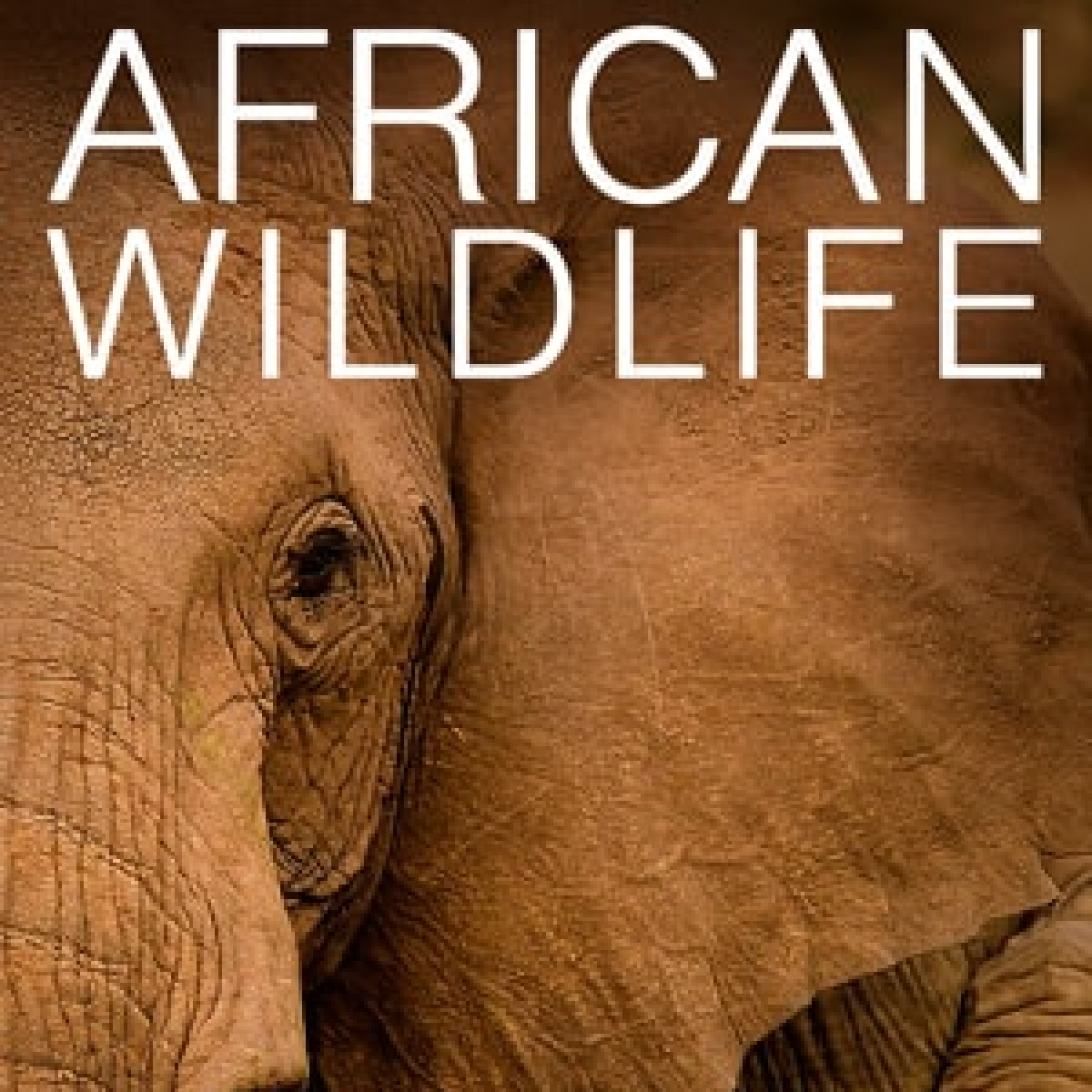 African Wildlife live cam