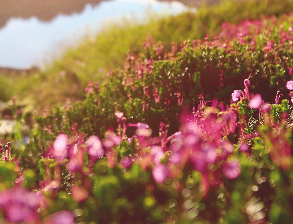 A Meditation for Emotional Spring Cleaning <br>Gustavo Padron</em>