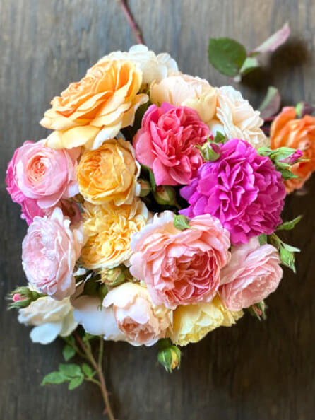 Menagerie Farm & Flower GARDEN ROSE COLLECTION