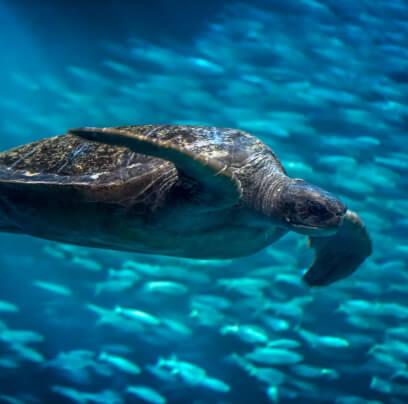 Monterey Bay Aquarium Live Animal Cams