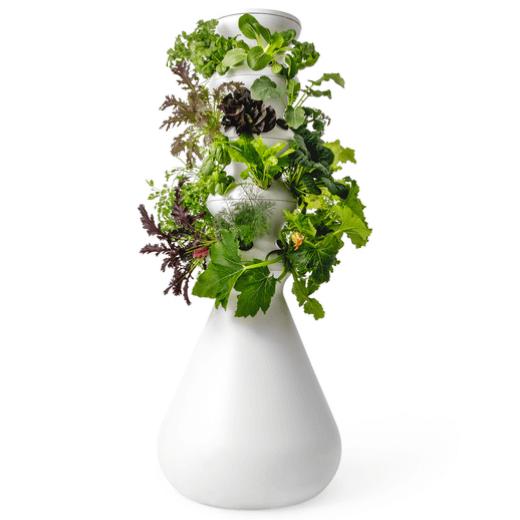 Lettuce Grow the farm stand
