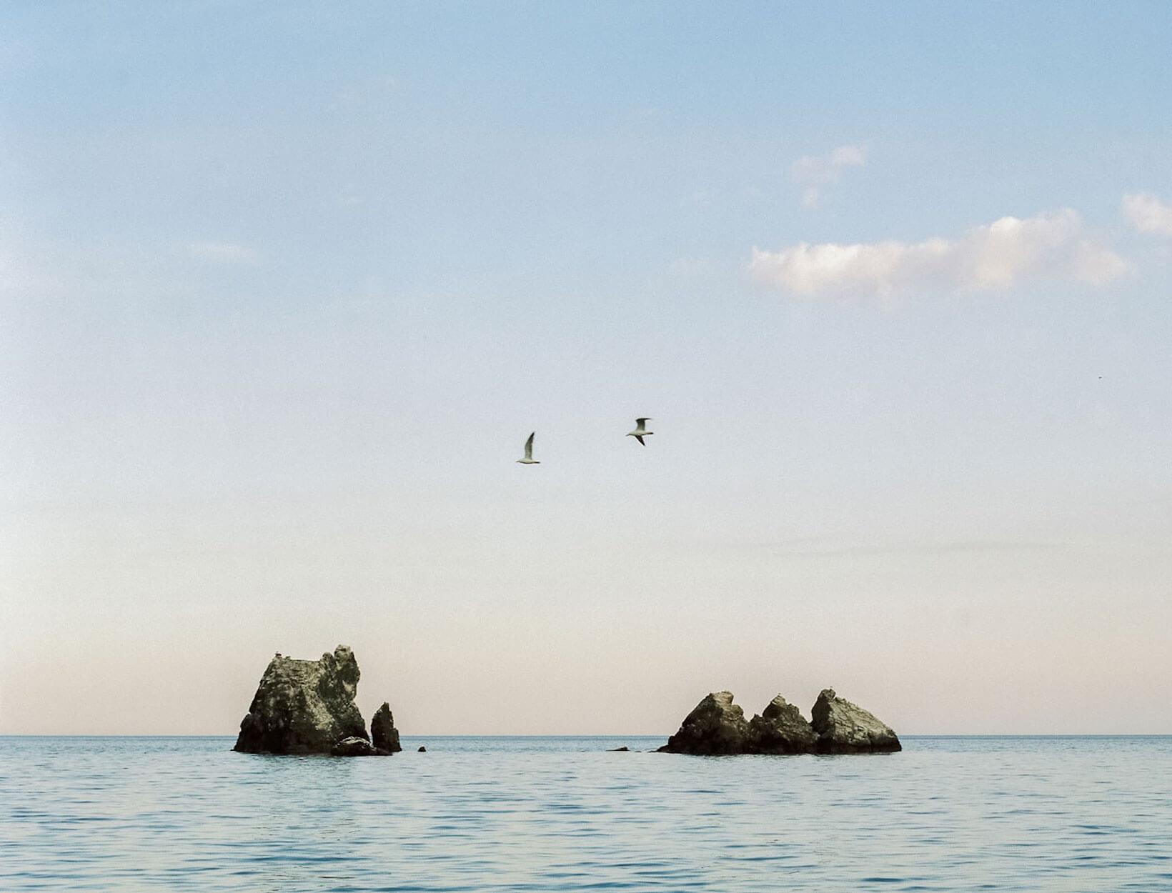 birds flying over an ocean