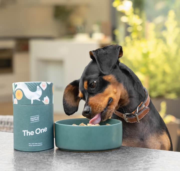 pup eating dog food