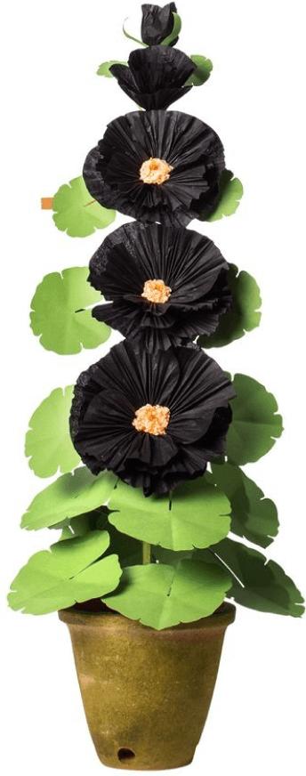 The Green Vase Hollyhock Plant successful  Black