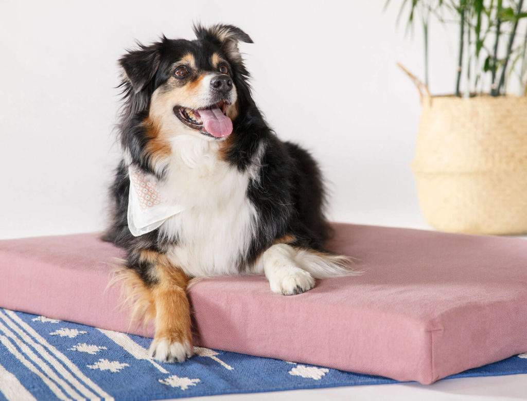 A Loving Approach to Dog Training