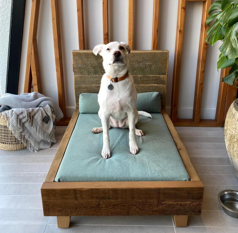 Avocado ORGANIC Dog Bed