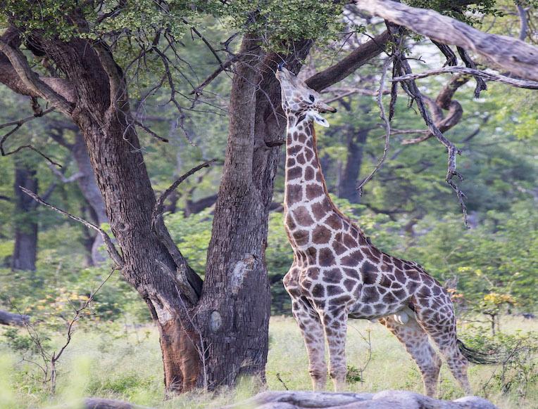 Okavango Delta<br><em>Botswana</em>