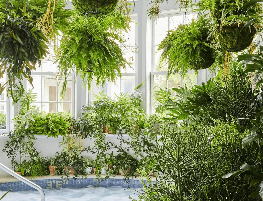 plants surrounding a blistery  tub