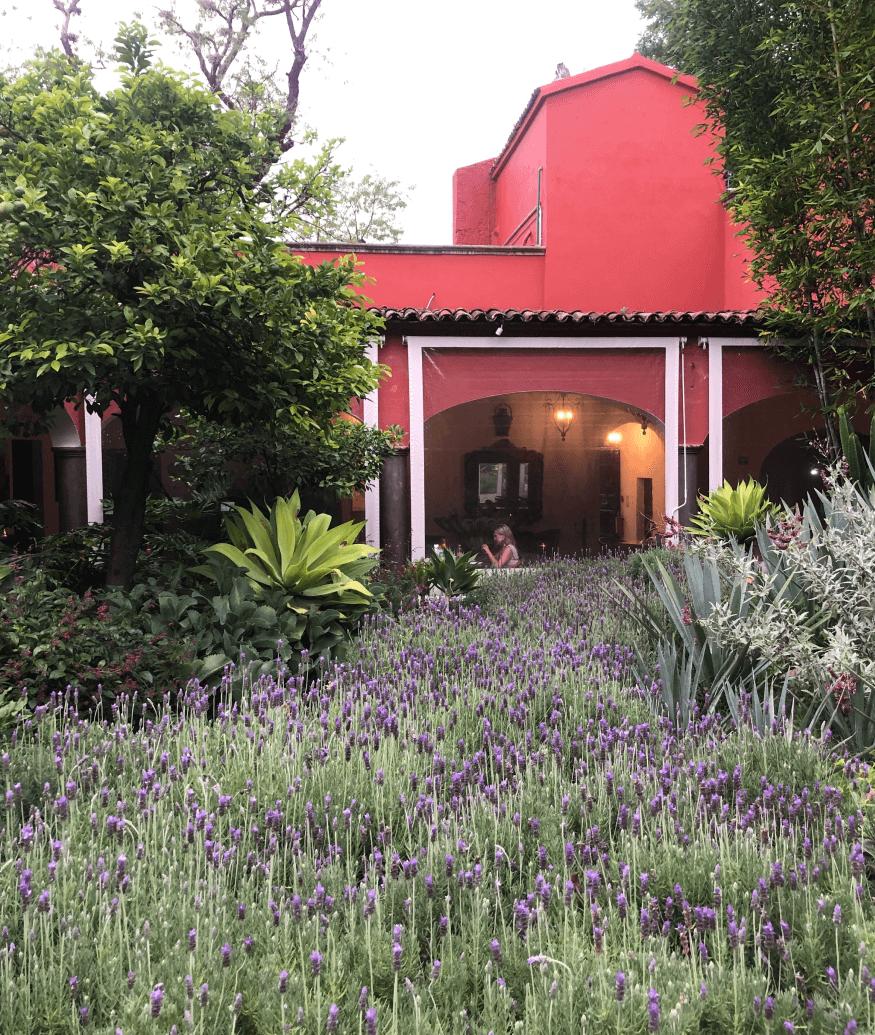 Casa de Sierra Nevada garden