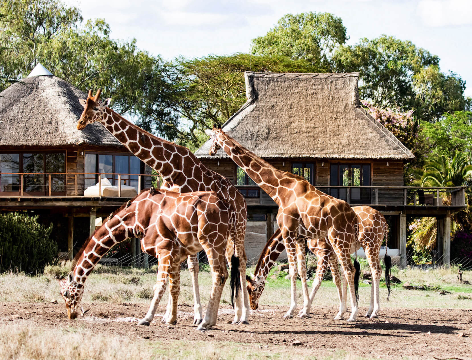 Seven Days of Extraordinary Safari in Northern Kenya